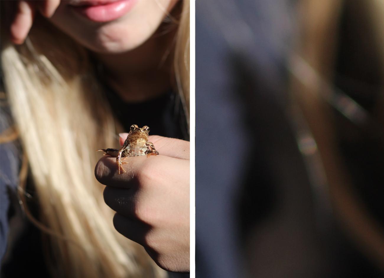 kiss_the_frog